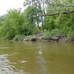 splyw-kajakowy-rzeka-wisla-modlin-twierdza-wyszogrod-41