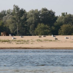 splyw-kajakowy-wisla-wyszogrod-plock-08